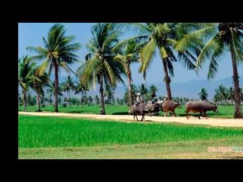 Cảnh đẹp Miền Tây | Đất Phương Nam | Tour du lịch Miền Tây