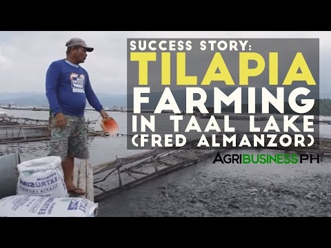 Tilapia farming success in Taal lake | Agribusiness Philippines