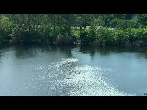 Cambria Hotel Miami Airport – Blue Lagoon
