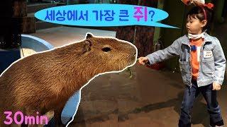 [30분]세상에서 가장 큰 쥐? 주렁주렁 애니멀 테마파크 실내 놀이터 동물 체험  LimeTube & indoor playground