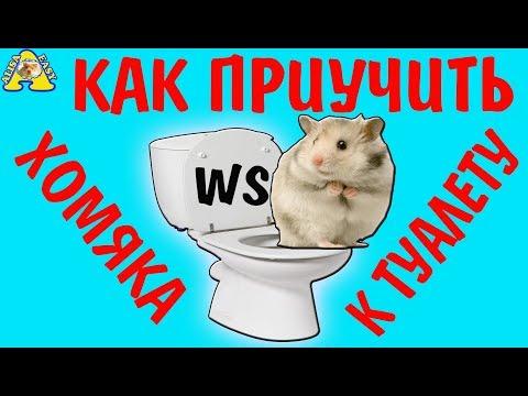 Как приучить хомячка к туалету