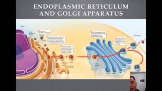 Endoplasmic Reticulum and Golgi Apparatus Tutorial