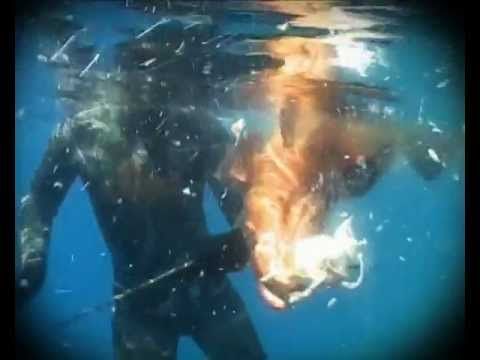 Deep Worldwide-Spearfishing & Freediving Extravaganza