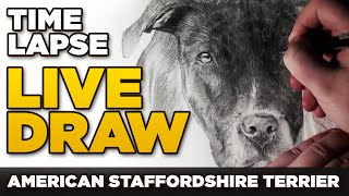 LT CREATIVE - Timelapse drawing - American Staffordshire Terrier