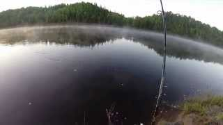 Northern Ontario Walleye Missinaibi River
