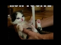 How To Give A Kitty A Bath Helpful tips for giving a kitten a bath