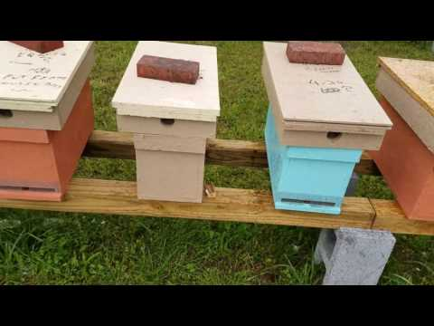 Make your own hive stands quick cheap wind resistant