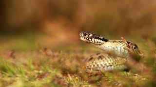 Überlebenskünstler Schlangen [Doku]