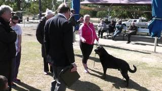 Rottweiler National Qld 2014 Diziz Another Rumour