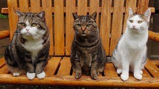 リニューアルしたブランコとねこ。 Renovated swing and Cats  001