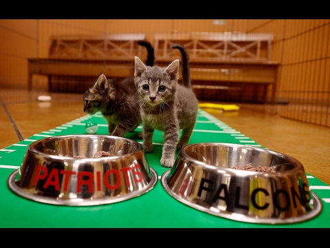 Puppies, kittens predict Super Bowl LI winner