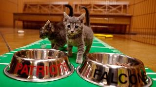 Puppies, kittens predict Super Bowl LI winner thumbnail