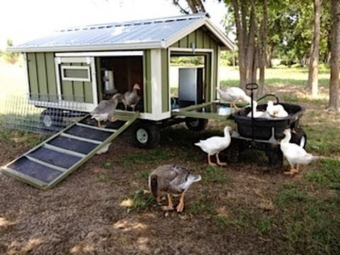 Portable goose wagon coop and pond with rain catchment for Building a duck house shelter