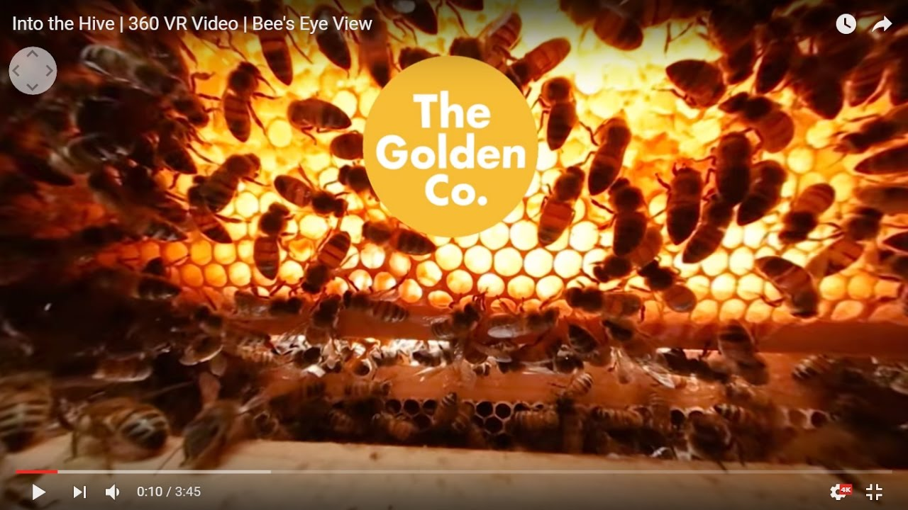 Into the Hive | 360 VR Video | Bee's Eye View