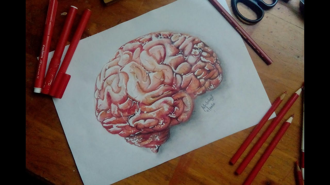 How To Draw A Human Brain Youtube