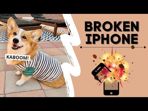DOG BREAKS NEW IPHONE 13! #shorts #corgi