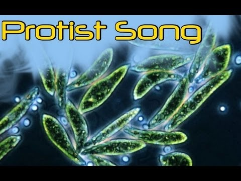 Protist Song - YouTube