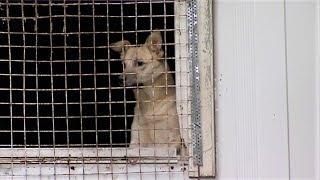 В сургутском лесу обнаружили вольеры с собаками