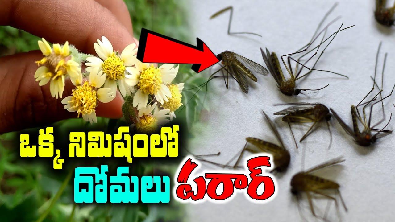 దోమలను తరిమికొట్టే అద్భుత చిట్కా || How To Get Rid Mosquitos Naturally in Telugu #kskhome