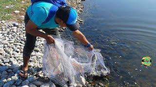 LA PESCA ASOMBROSO CON ATARRAYA - Pesca y Capturas de Tilapias Grandes