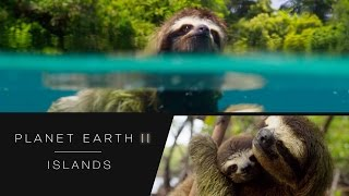 Swimming sloth - Planet Earth II: Islands Preview - BBC One