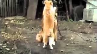 Кошка и Собака танцуют
