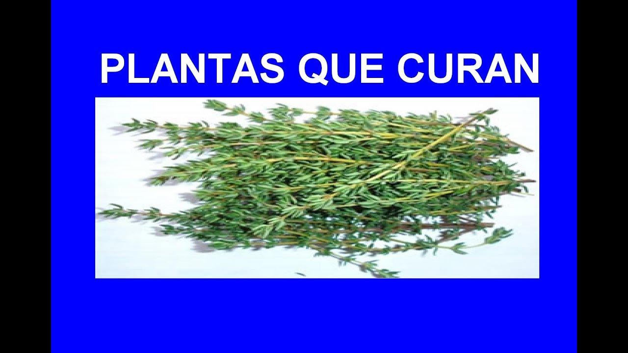 Propiedades del Tomillo como Planta Medicinal. - YouTube