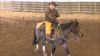 Debourrage cheval de ranch 2 mois en bosal par Michel Pourras