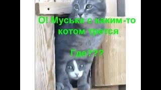Приколы с котами 2016 новые подборки Которолик выпуск 12 смешные коты