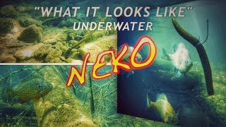 3 NEKO Rig Hook Positions | What it Looks Like Underwater