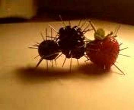punk berries