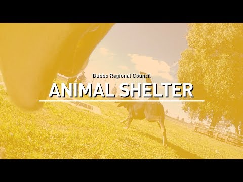 Dubbo City Animal Shelter - Dubbo Regional Council