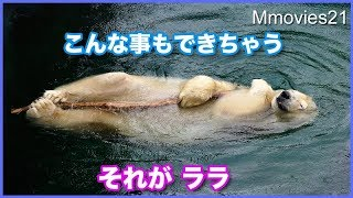 Interesting facts polar bear