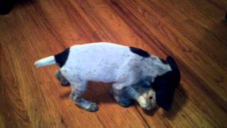 German Shorthaired Pointer Puppy Fighting A Stuffed Animal