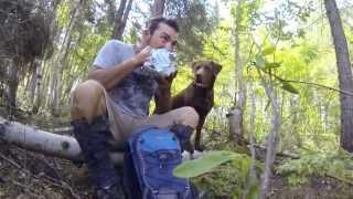 Coniferous - A Tree Planter Story