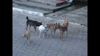 Perros Pegados FAIL