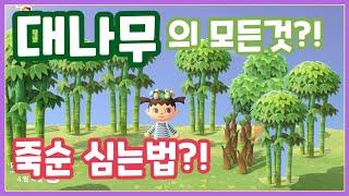 [동물의 숲]  대나무 얻는법! 죽숙심는법 및 대나무 …
