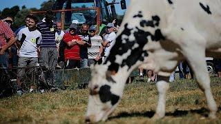Le secteur laitier européen n'a pas digéré la fin des quotas