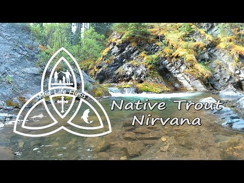 Fly Fishing Small Streams | Euro Nymphing For Native Trout