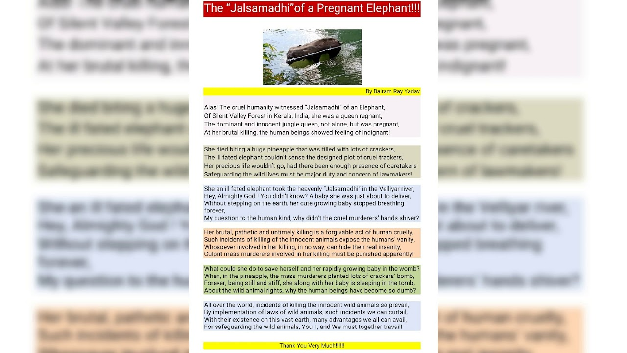 || The Jalsamadhi of a Pregnant Elephant || Pregnant Elephant || A poem composed by Balram Yadav ||