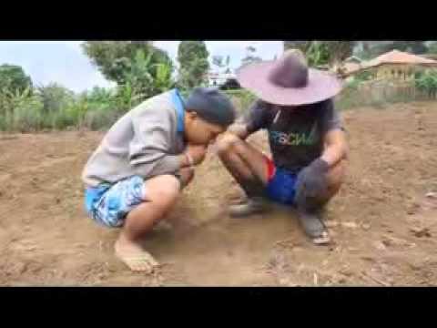 Bodoran Kang Ibing Tikotok.