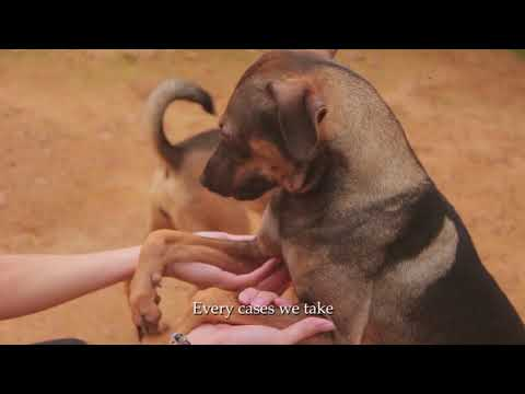Malaysia Independent Animal Rescue (Stray Dog Documentary)