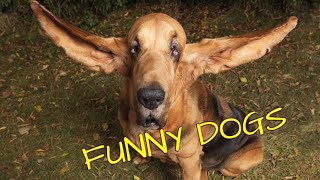Funny videos of Dogs.