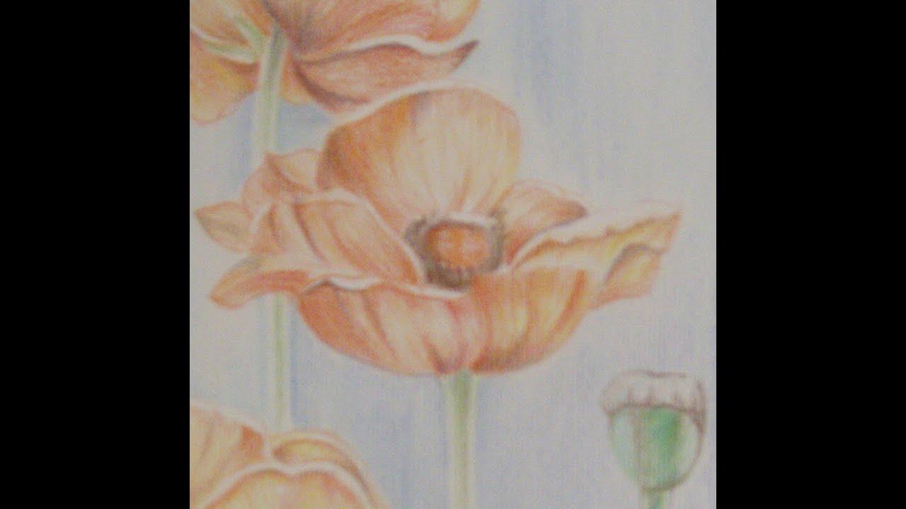 Come disegnare papavero con le matite colorate tutorial for Disegni di fiori a matita
