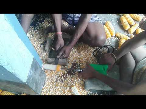 Makka Clean in Bihar , Samstipur