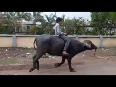 Gadi have ratanpur border javani