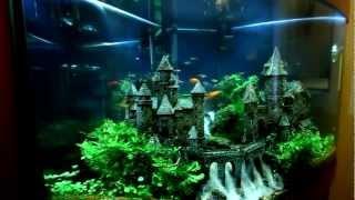 Замок(Угловой аквариум по индивидуальным размерам. Примерный объем- около 150 литров. Возраст аквариума на момент..., 2012-11-26T20:12:02.000Z)