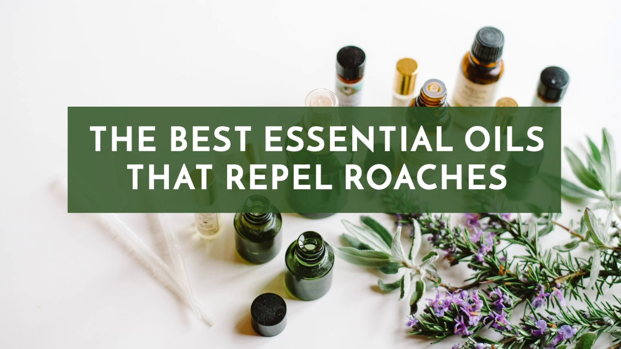 The Best Essential Oils That Repel Roaches Youtube