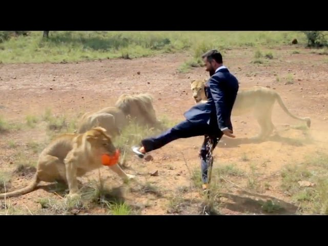 Playing Soccer with Lions | Outrageous Acts of Science