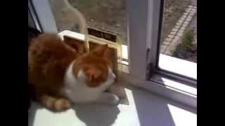 19 кошка птицы за окном